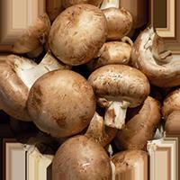 champignon_icon