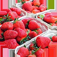 erdbeeren_icon
