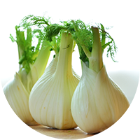 fennel_icon