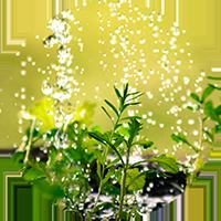 jungpflanzen_icon