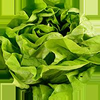 salat_icon